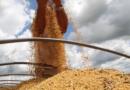 Mato Grosso impulsiona recorde agropecuário brasileiro
